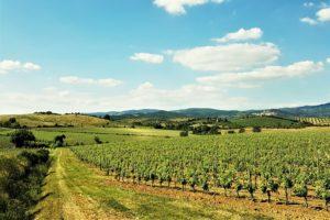 offerte pasqua 2019 panorama maremma toscana vigneti