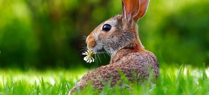 offerte pasqua 2019 coniglio in un prato