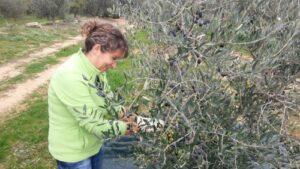 donna raccoglie le olive a mano