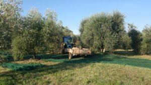 trattore in un oliveto in Toscana